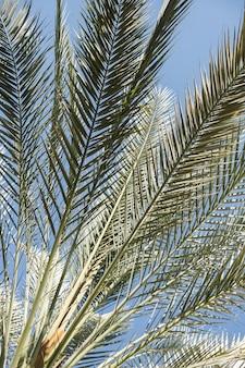 Folhas de palmeira de coco. linda natureza tropical exótica de verão Foto Premium