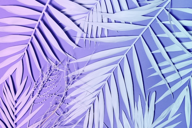 Folhas de palmeira de néon colorido