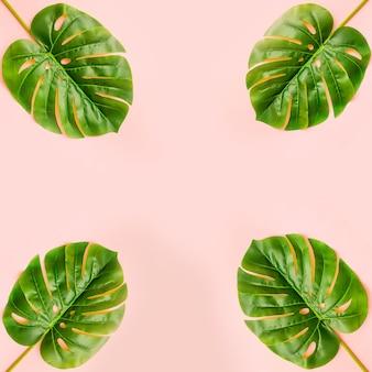 Folhas de palmeira de verão na luz de fundo rosa