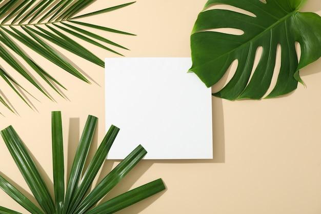 Folhas de palmeira diferentes e espaço vazio na tabela de cores