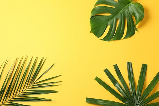 Folhas de palmeira diferentes na mesa amarela