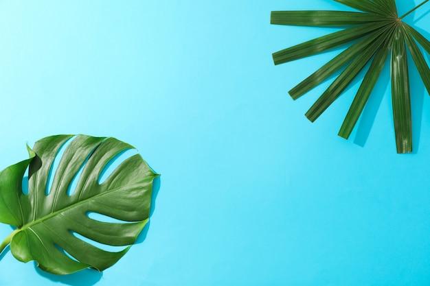 Folhas de palmeira diferentes na mesa azul