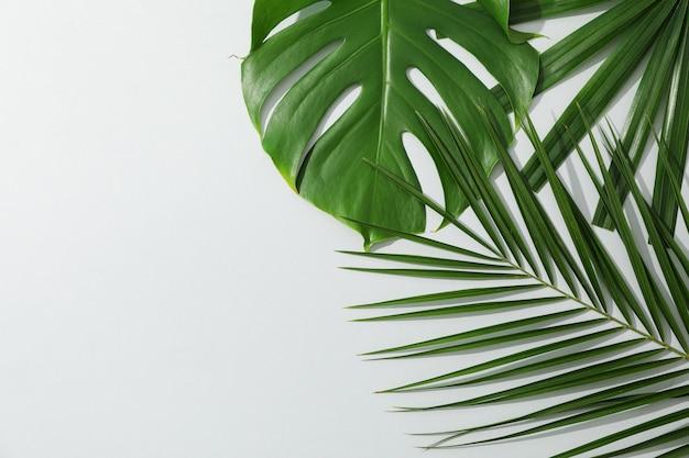 Folhas de palmeira diferentes na mesa cinza