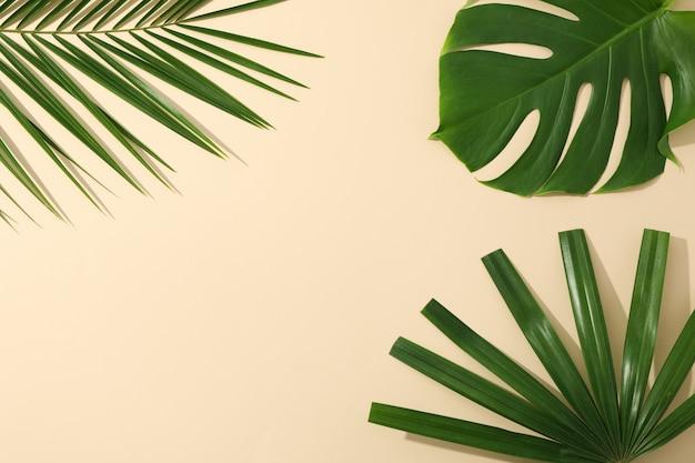 Folhas de palmeira diferentes na tabela de cores