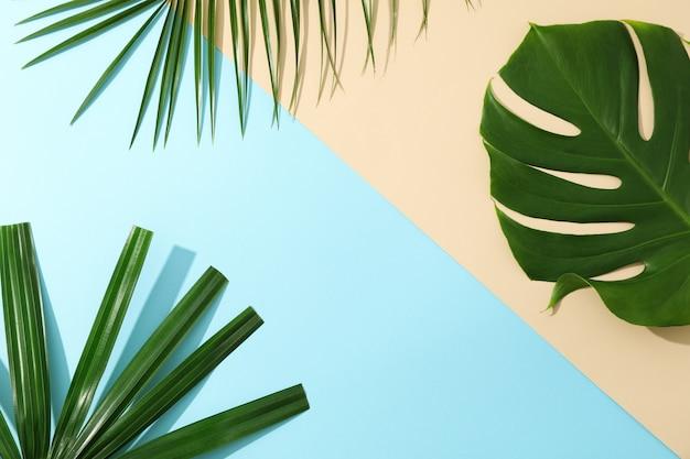 Folhas de palmeira diferentes na tabela de duas cores