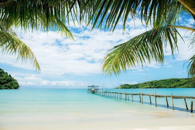 Folhas de palmeira e ponte no mar.
