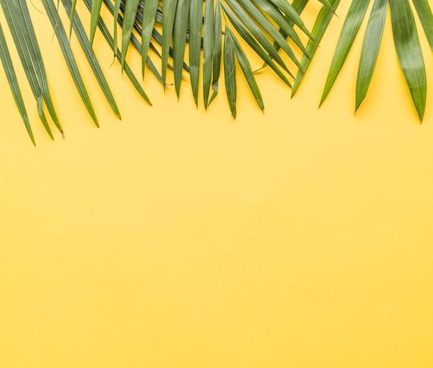 Folhas de palmeira em fundo amarelo
