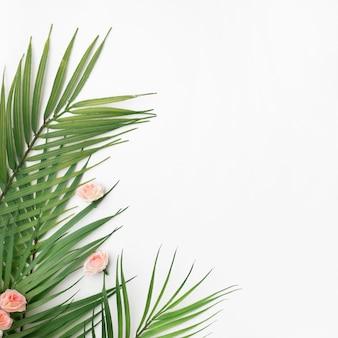 Folhas de palmeira em fundo branco com espaço de cópia