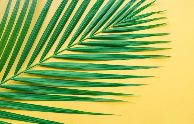 Folhas de palmeira em fundo de cor pastel. conceitos de design de padrão botânico.