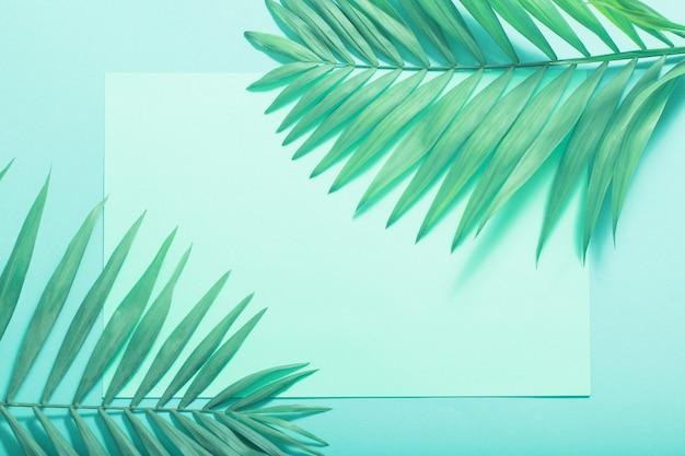 Folhas de palmeira em fundo de papel