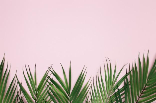 Folhas de palmeira em fundo rosa