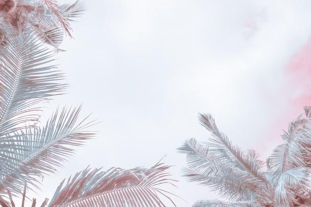Folhas de palmeira em uma tonalidade clara de fundo com desfoque