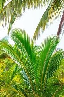 Folhas de palmeira fofas na floresta tropical viagens e turismo na ásia