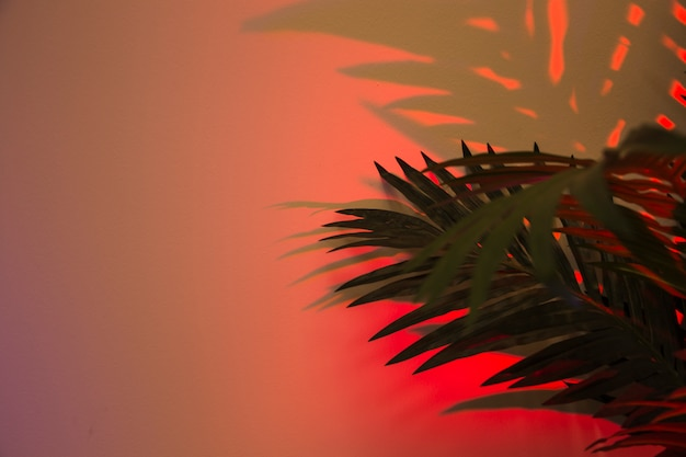 Folhas de palmeira fresca com sombra no pano de fundo colorido vermelho