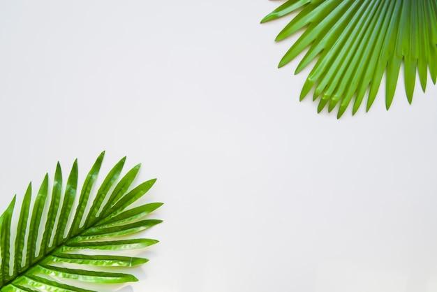 Folhas de palmeira isoladas no fundo branco