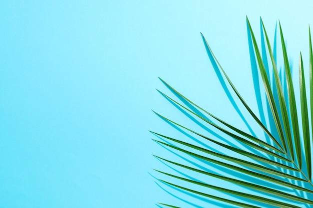Folhas de palmeira linda na cor de fundo, vista superior e espaço para texto. planta exótica