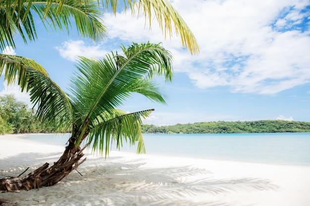 Folhas de palmeira na areia.