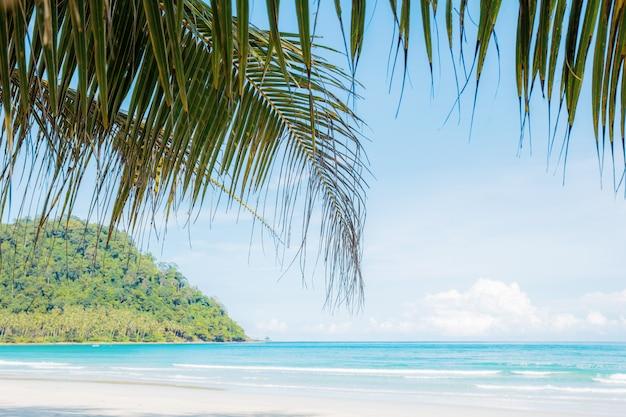 Folhas de palmeira na praia no céu.