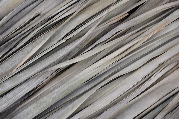 Folhas de palmeira naturais secas com padrão de textura de cores bege cinza silenciado fundo abstrato