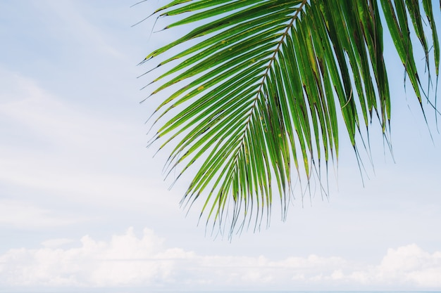Folhas de palmeira no céu.