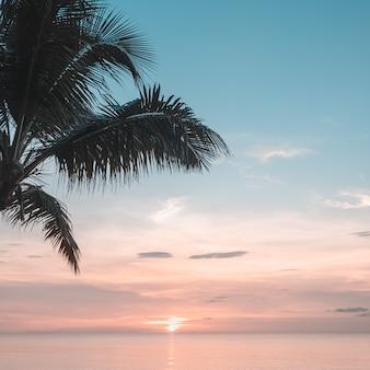 Folhas de palmeira no fundo por do sol
