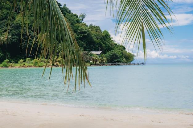 Folhas de palmeira no mar no verão com o céu.