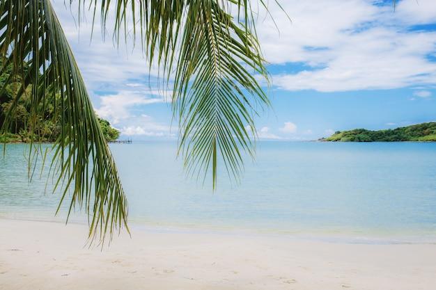Folhas de palmeira no mar.