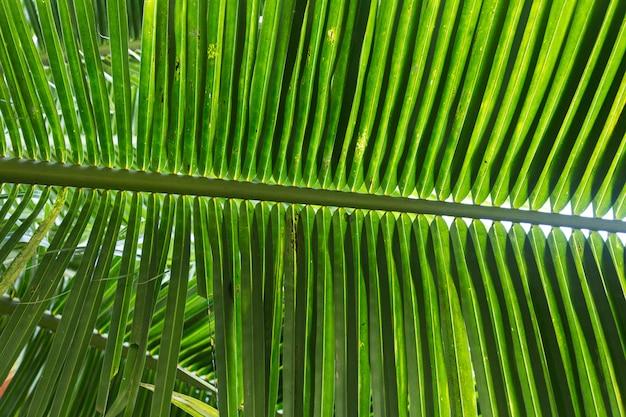 Folhas de palmeira no parque