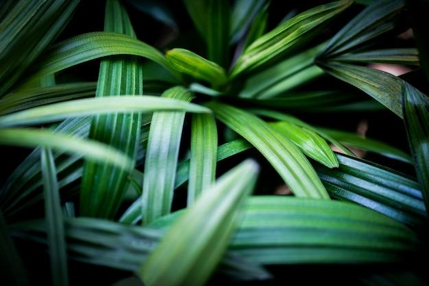 Folhas de palmeira planta tropical close-up folha verde na folhagem da selva