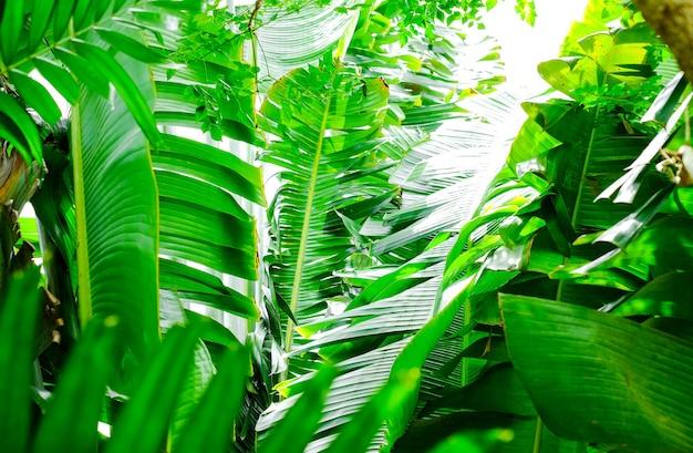 Folhas de palmeira, plantas exóticas na selva. fundo verde natural