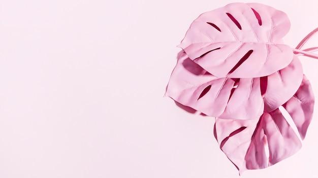 Folhas de palmeira rosa vista superior com espaço de cópia