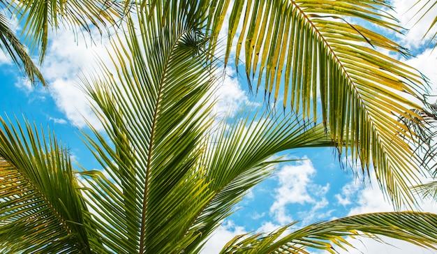 Folhas de palmeira sobre o fundo do céu azul