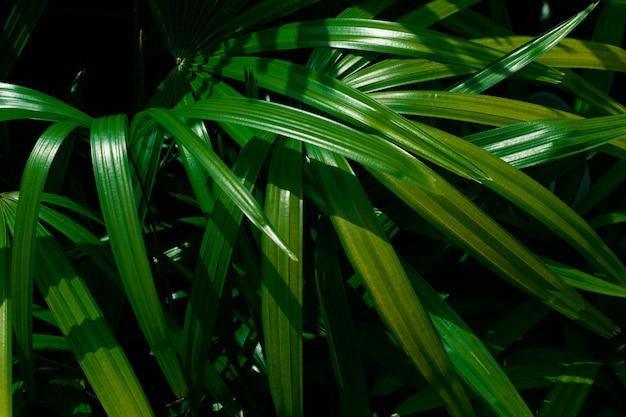 Folhas de palmeira tropicais, fundo verde padrão floral. foto de foto de chave baixa.