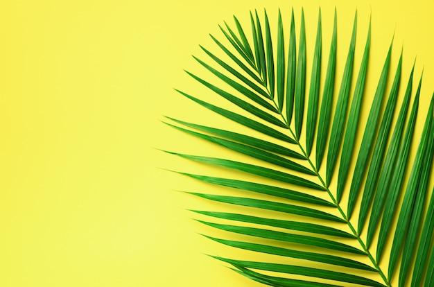 Folhas de palmeira tropicais no fundo amarelo pastel. conceito de verão mínima. folha de vista superior verde no papel pastel punchy
