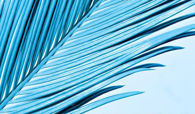 Folhas de palmeira tropical closeup de ramo azul de cor neon