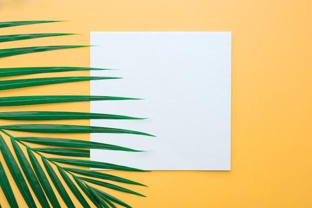 Folhas de palmeira tropical com cartão de papel branco moldura em fundo de cor pastel