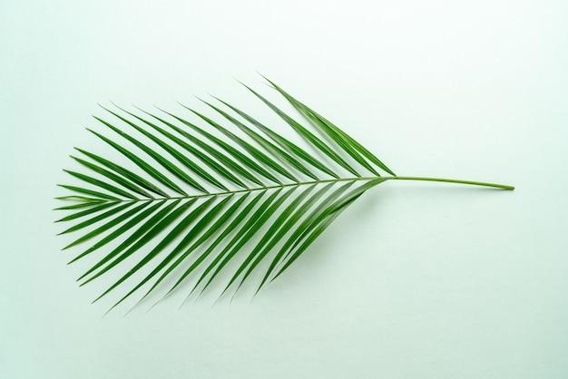 Folhas de palmeira tropical com espaço de cópia