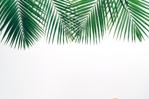 Folhas de palmeira tropical com fundo branco copyspace