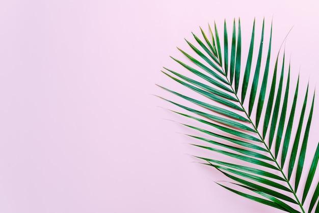 Folhas de palmeira tropical com fundo copyspace