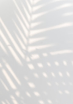 Folhas de palmeira tropical com sombra em uma parede branca