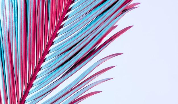 Folhas de palmeira tropical cor neon azul rosa vermelho ramo branco