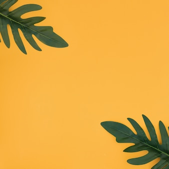 Folhas de palmeira tropical em fundo amarelo. conceito de verão.