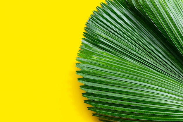 Folhas de palmeira tropical em fundo amarelo.