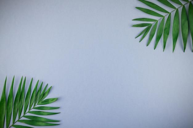 Folhas de palmeira tropical em fundo azul papel cinza