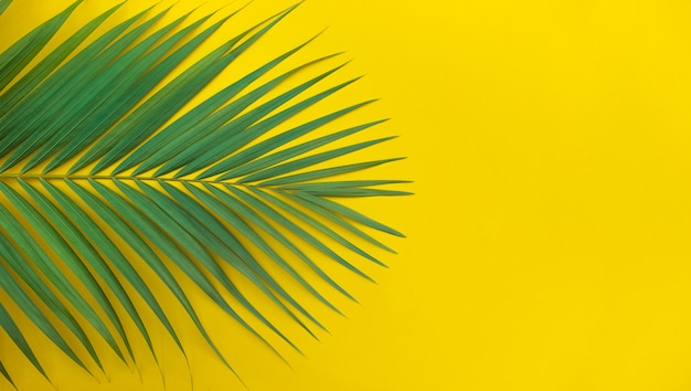 Folhas de palmeira tropical em fundo colorido.