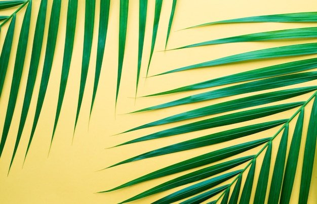 Folhas de palmeira tropical em fundo de cor pastel