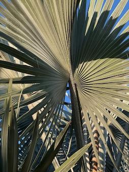 Folhas de palmeira tropical exótica no verão contra o céu azul
