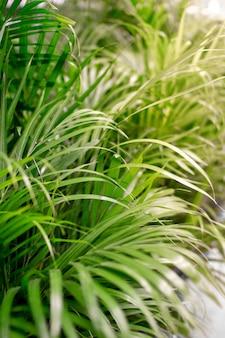 Folhas de palmeira tropical, folhas da selva, fundo padrão floral