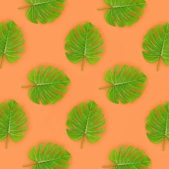 Folhas de palmeira tropical monstera situa-se na laranja
