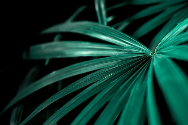 Folhas de palmeira tropical no jardim